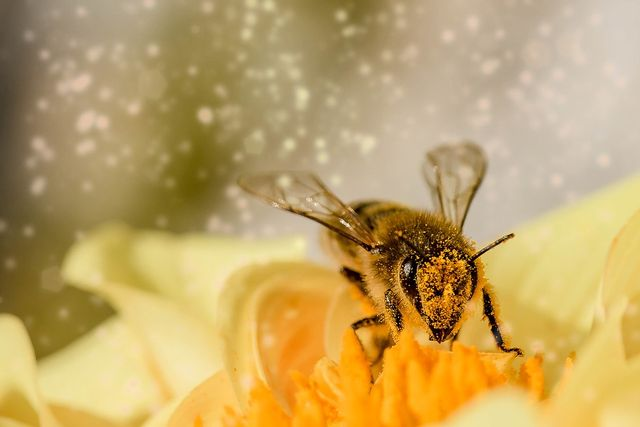 How to create a bee-autiful garden   Seeff Property Group